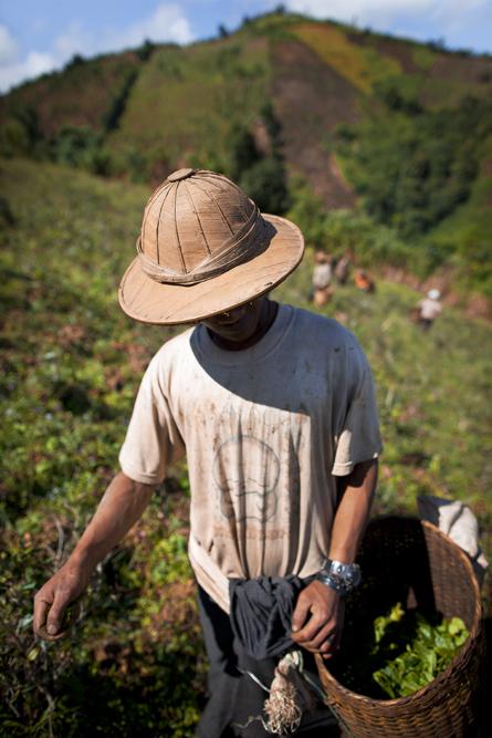 Myanmar 102web